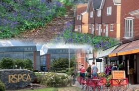 Bluebells, new homes, the RSPCA building and a restaurant in Horsham District