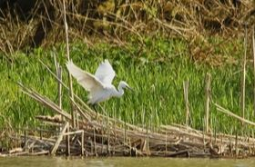 A bird spreads its wings at Warnham Local Nature Reserve