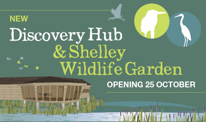 Warnham Discovery Hub and Shelley Wildlife Garden, opening October 25
