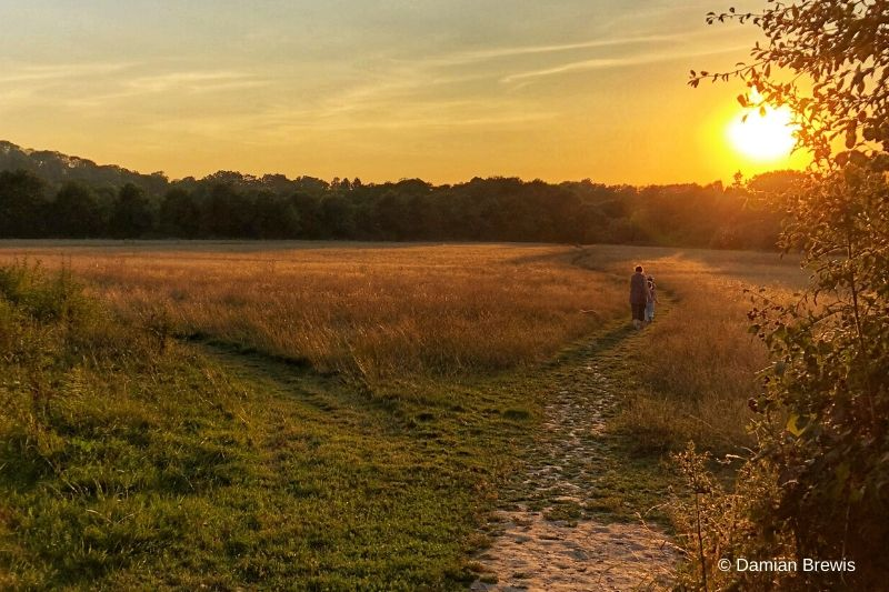 A sunset walk over meadow and grassland at Chesworth Farm